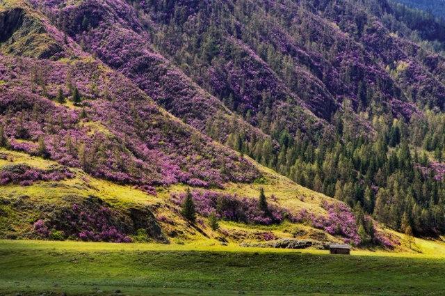 Горы покрытые маральником