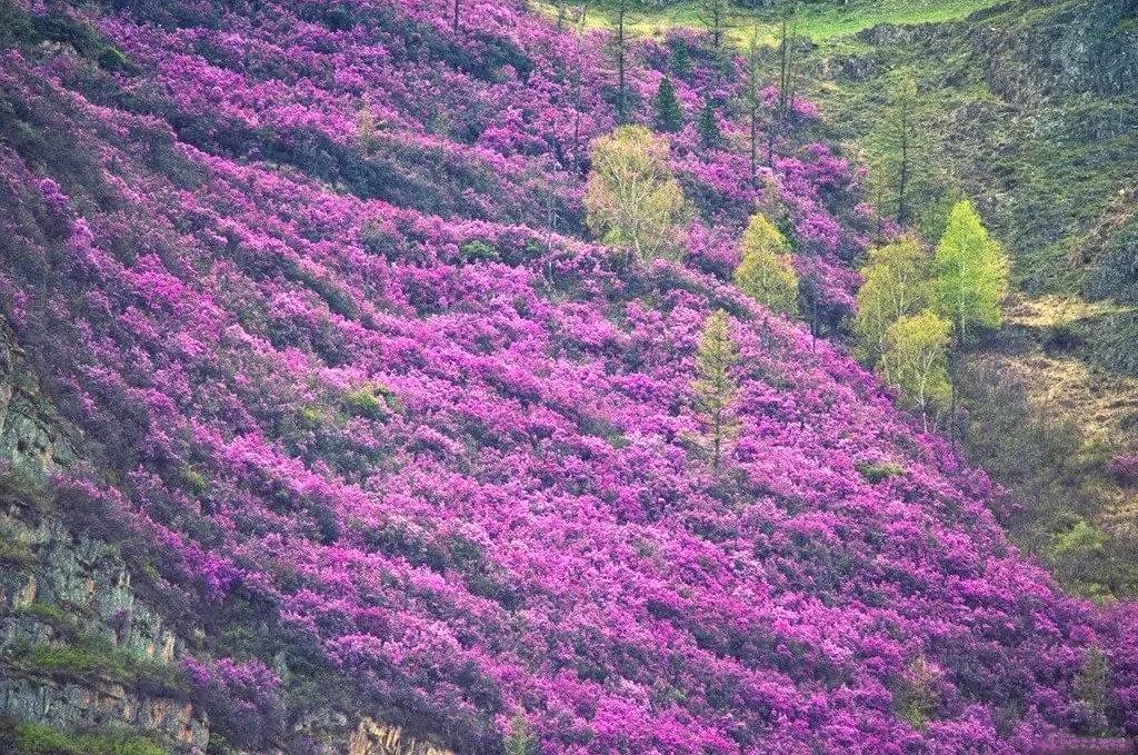 Майские на Алтае