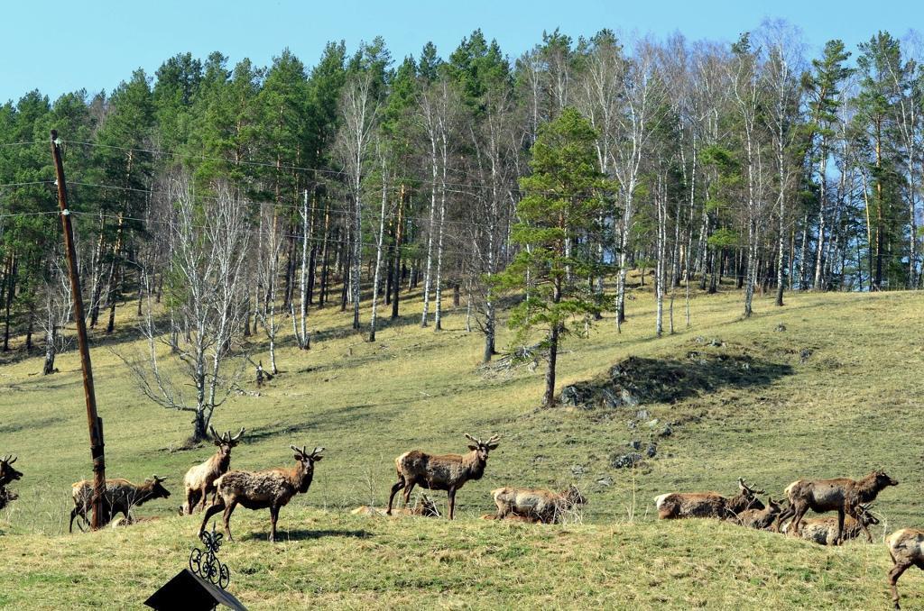 туры на Алтай